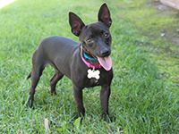 Image links to webpage for adoptable dogs