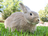 image links to webpage of adoptable rabbits and other small animals