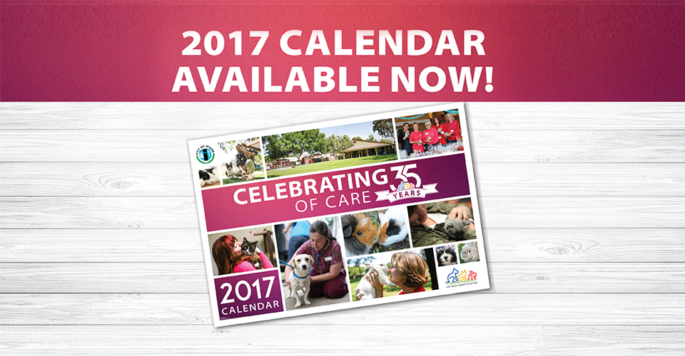 Synthroid Sale Volume Calendar. Free Bonus Pills With Every Order. Cheapest Prices on Internet. Canada Licensed Doctors Prescribe ED Medication Online, VIPPS Pharmacy Ships to You Since Secure Medical has Processed over 2 Million Orders!